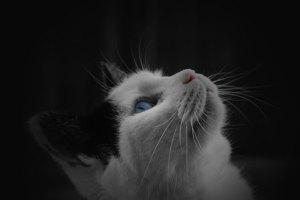 cat-331299607018k1R