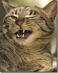 happycat1.jpg
