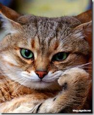 the_thinking_cat_large