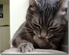 thinking-cat.jpg