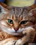 the_thinking_cat_large.jpg