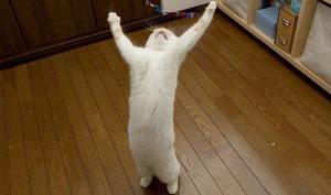 hallelujah_cat.jpg