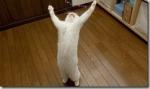 hallelujah_cat_thumb.jpg