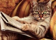 catnews
