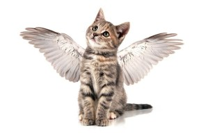 Get-angel