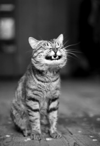 happy-cat