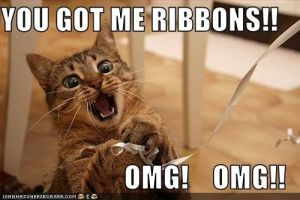 ribbon-cat