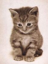 Sad_Kitty