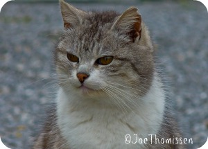 domestic-cat-of-beauty-f395e14a-0b1e-4c49-919b-18da12b28f3d