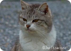 domestic-cat-of-beauty-f395e14a-0b1e-4c49-919b-18da12b28f3d