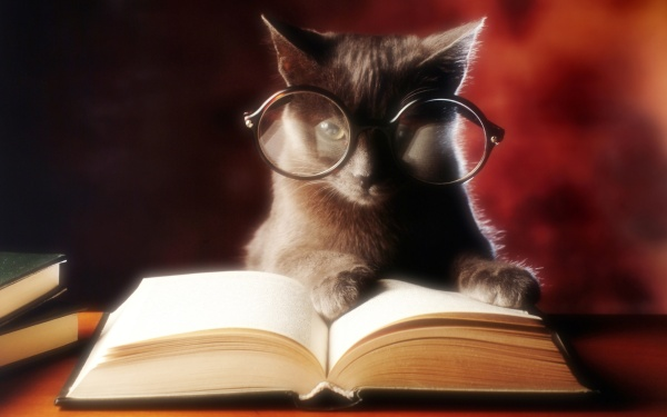 wise-cat-glasses-reading-book-animals-and_439957