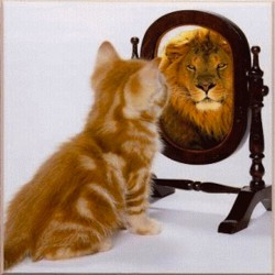 cat-sees-lion-mirror