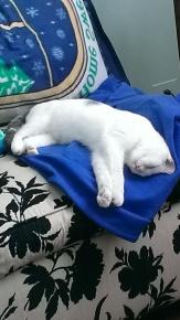 sleepyjack