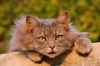 cat-401124_640