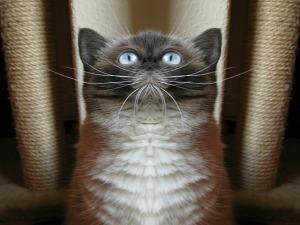 cat-607591_640