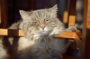 cat-645084_640