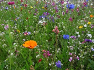 flower-meadow-52086_640