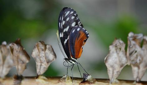 butterfly-612208_640