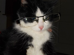 cat-with-glasses-361462_640