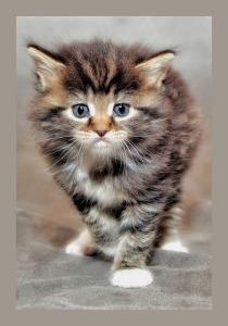 baby-cat-1168535_640