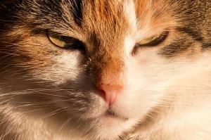 cat-667909_640