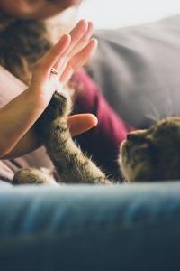 cat-691175_640