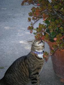 cat-829653_640