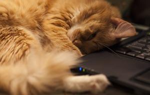 cat-964480_640