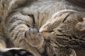cat-1083426_640