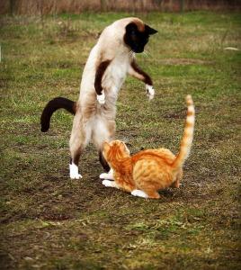 cat-1234941_640