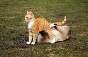 cat-1234986_640