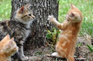 cats-204184_640