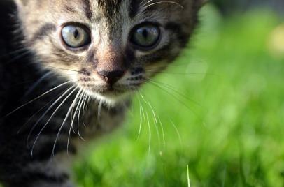 cat-727264_640
