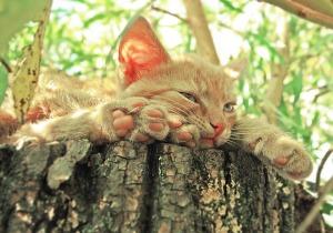 cat-1134289_640