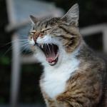 cat-1584966_640