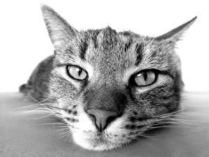 cat-98359_640