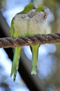parrot-316442_640