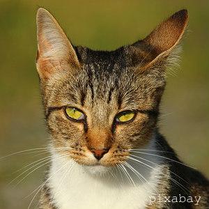 cat-1589373_640