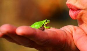 frog-prince-334970_640