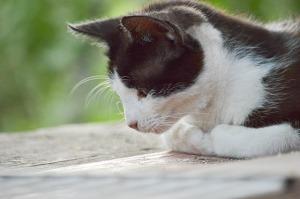 cat-1520276_640