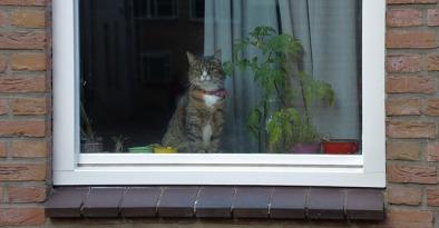 cat-1547112_640