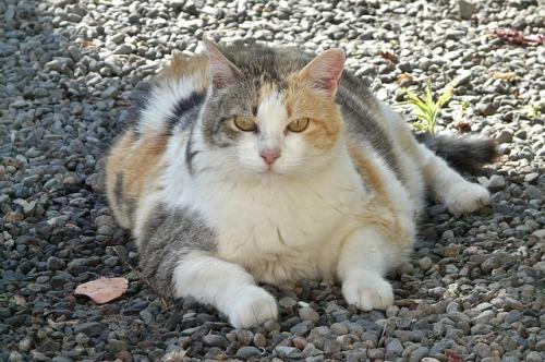 lucky-cat-1196761_640