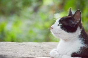 thinking-cat-1520277_640