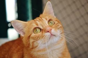 cat-1044764_640