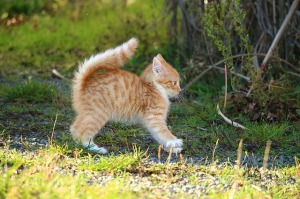 cat-1064078_640