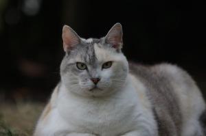 cat-1662447_640