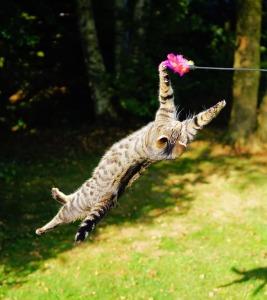 cat-1680873_640