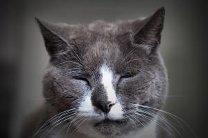 cat-1681668_640-1