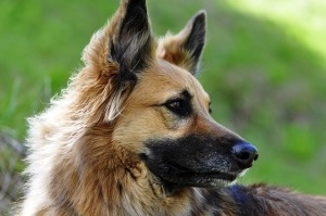 dog-113513_640