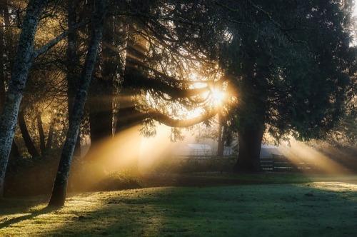 sunrise-1886619_640